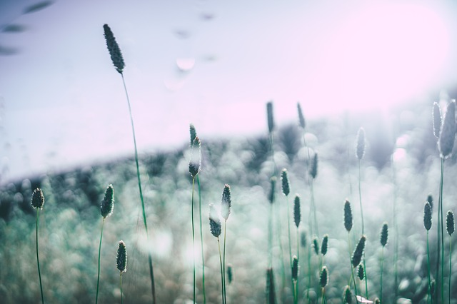 Alergie i alergie krzyżowe – czym są?